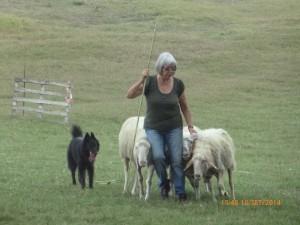 Fiamma sheepdog